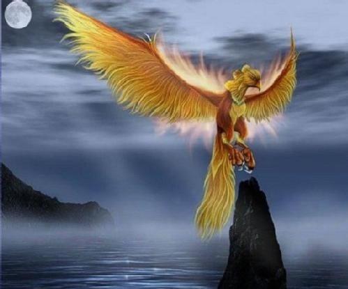 ave fenix como simbolo de la reinvencion mas alla de la mitologia