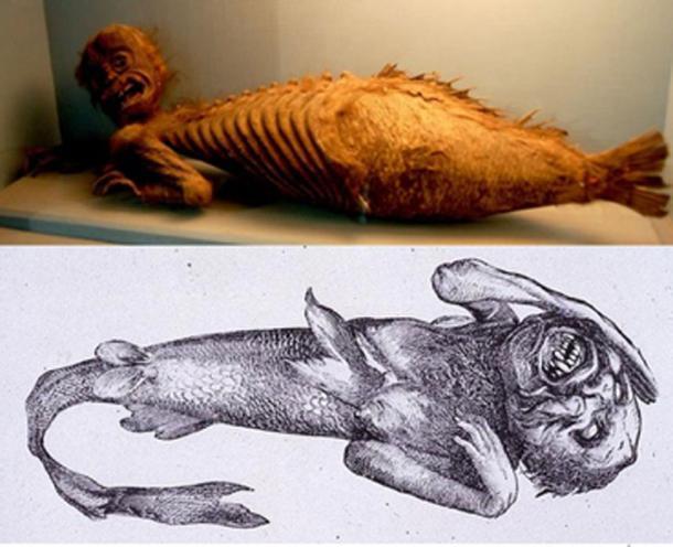 [Arriba] Fiji Mermaid, en la sección Folklore de la Haus der Natur (Casa de la Naturaleza), una colección de historia natural en Salzburgo, Austria. (CC BY-NC-SA 2.0 ) [Abajo] PT Barnums Feejee sirena (dominio público)
