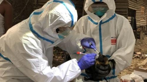 nipah el otro virus que preocupa en asia y como trabajan los cientificos para que no provoque otra pandemia