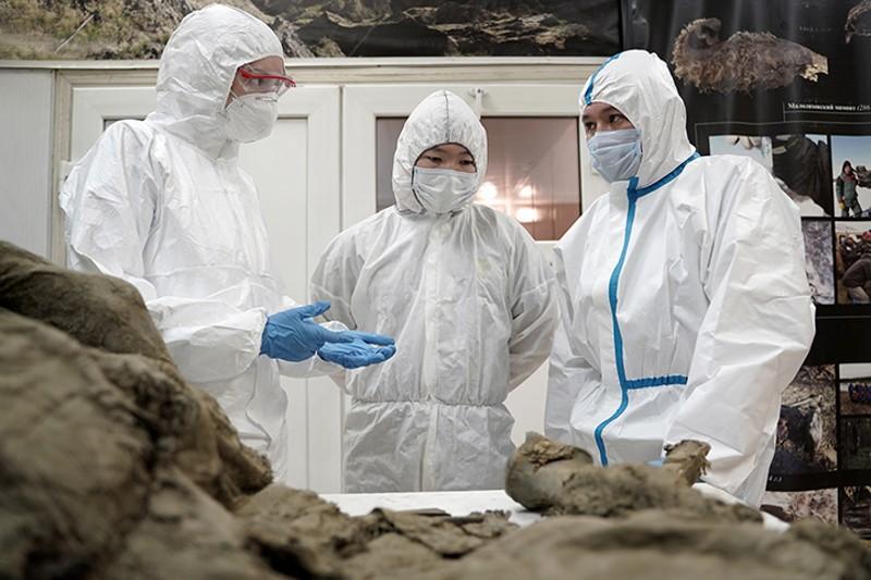 Científicos rusos intentan extraer virus prehistóricos de cadáveres de animales de 50.000 años