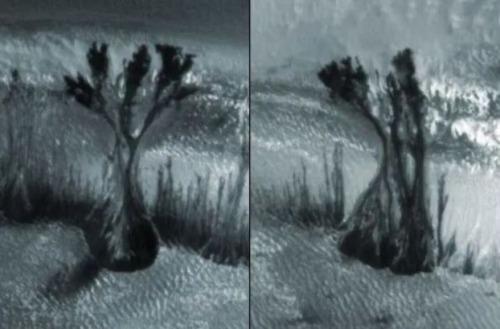 el enigma de los arboles marcianos que muestran estas extranas imagenes