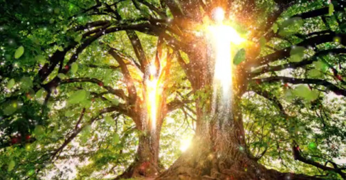 El árbol de la vida, un antiguo signo místico notable en varias sociedades