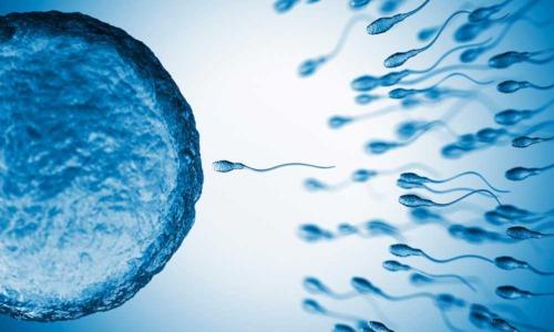 Los espermatozoides proporcionan claves para la reencarnación