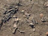 manos gigantes descubiertas en fosas de 3 600 anos en egipto 197