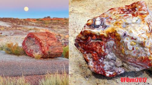 tronco de arbol de opalo petrificado ubicado en arizona tiene aproximadamente 225 millones de anos