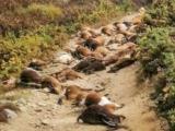 rayos del cielo en portugal un extrano rayo exploto desde el interior 68 cabras