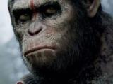 abierta la caja de pandora primeros embriones mezcla de humanos y monos