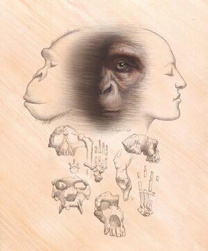 La mayor parte de las hipotesis sobre los orígenes humanos no son compatibles con los fósiles conocidos