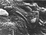 el controvertido meteorito de marte que probablemente contenia vida