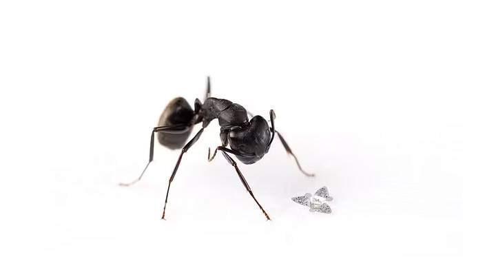 """Desarrollan microchip """"volador"""" del tamaño de un grano de arena para """"rastrear dolencias transmitidas por el aire"""""""
