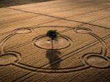 crop circles el mensaje que ocultan los circulos de las cosechas